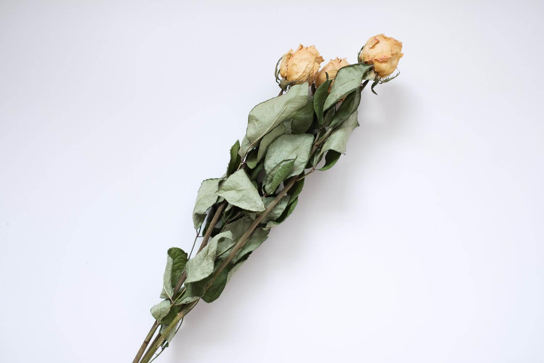 ドライフラワー福袋 バラ 葉はこんな感じ