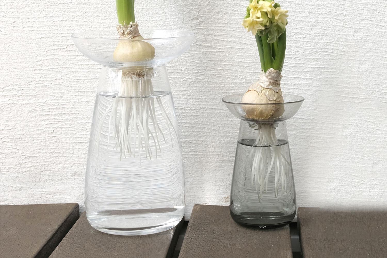【レビュー】球根の水栽培用にKINTOのアクアカルチャーベースを購入しました。花瓶としても使えます